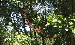 ฝูงผึ้งหลวงรุมต่อยยายวัย 74 ดับคาสวน ชาวบ้านผวาอาถรรพ์ วอนผู้มีมนต์ทำลาย