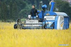 ไม่ทิ้งรากเหง้า สาวจีนสร้างตัวสู่ชาวนา 4.0 ใช้เครื่องจักรยุคใหม่ช่วยปลูกข้าว