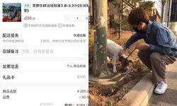 หนุ่มจีนเมาหนัก เผลอกดช้อปออนไลน์วันคนโสด ซื้อทั้งหมูแคระ-นกยูง-ซาลาแมนเดอร์
