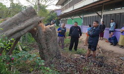 """""""ชาวหนองกุงศรี"""" ลั่น! ขอปกป้องไม้พะยูงอีก 100 ต้น-หลังแก๊งมอดไม้ลอบตัดแล้วถึง 7 ครั้ง"""