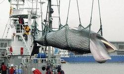เมินนานาชาติ ญี่ปุ่นถอนตัว IWC ปีหน้า เดินหน้าล่าวาฬเพื่อการค้า