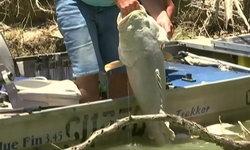 ปลาตายปริศนานับหมื่นตัวในออสเตรเลีย ชนพื้นเมืองเชื่อลางเตือนภัยพิบัติ