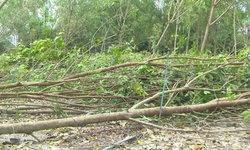 สั่งเด้งทันควัน ตำรวจจับเลื่อยยนต์ชาวบ้าน ตอนช่วยรื้อต้นไม้ล้มจากพายุปาบึก