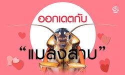 """สุดแปลก! หนุ่มญี่ปุ่นหลงรัก-ออกเดตกับ """"ลิซ่า"""" แมลงสาบสาวที่เลี้ยงไว้"""