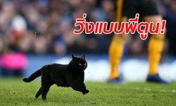 """น่ารักขโมยซีน """"เจ้าแมวดำ"""" โผล่ป่วนสนามบอลพรีเมียร์ลีก คู่ """"ทอฟฟี่-หมาป่า"""""""