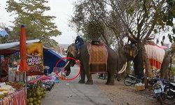 คลิปเฉียดตาย สาววัย 19 ปี ถูกช้างคลั่งพุ่งชน ไหวพริบดีกอดงาแน่นไม่ปล่อย