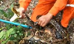 """ชาวสวนลำไยช็อก! งูเหลือมโผล่ท่อส่งน้ำ-เจ้าของเผยทั่วทั้งสวนคือ """"ดงงู"""""""