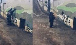 เจ้าจ๋ออุรังอุตังโชว์เท่ ทำหกสูง-ตีลังกากลับหลัง ชาวเน็ตสุดถูกใจแซวว่ามีกังฟู (คลิป)