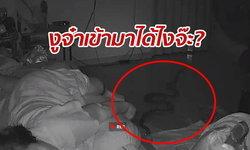 วงจรปิดจับนาทีสยอง งูเลื้อยมาหาถึงห้องนอน หวิดฉกคุณป้ากำลังหลับ