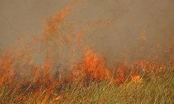 มักง่าย! ชาวบ้านลอบเผาตอซังข้าว ลามไหม้ป่า 50 ไร่ ที่ชัยภูมิ