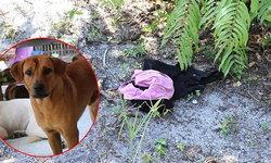 ทรชนโหดหื่น ทุบหัว-ข่มขืนยายวัย 72 ตายคาสวนปาล์ม หมานำทางสามีพบศพ