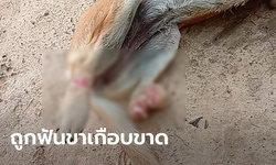 หนุ่มบุรีรัมย์โพสต์ประณามคนใจบาป ฟันสุนัขจนขาเกือบขาด