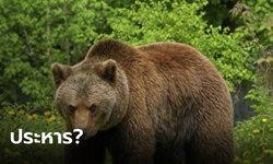 """นักอนุรักษ์ลุกฮือ หลัง """"หมีสีน้ำตาล"""" ถูกตัดสินประหารชีวิต ข้อหาทำร้ายนักเดินป่า"""