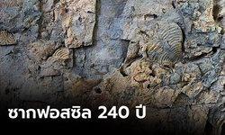 จังหวัดเพชรบูรณ์ค้นพบซากฟอสซิล อายุกว่า 240 ปี