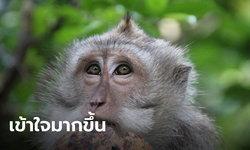 """สคต.เผย ทำความเข้าใจยุโรปเรื่อง """"ลิงเก็บมะพร้าว"""" ราบรื่น ลุ้นสินค้าไทยกลับมาขายได้"""