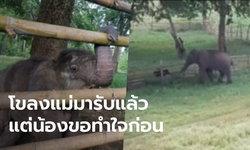 เผยนาทีช้างโขลงแม่มารับลูกช้างพลัดหลง ยื่นงวงแตะกัน แต่เจ้าตัวเล็กยังไม่ยอมตามไป