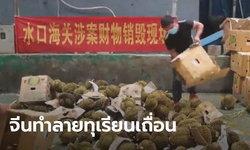 ของที่อื่นไม่เอา! จีนทำลายทุเรียนเถื่อน ลักลอบนำเข้า ลั่นอนุญาตเฉพาะไทย-มาเลเซีย