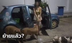 เจ้าของสุนัขพิทบูลเครียดจัด! พาหมา 3 ตัว ขับรถหาบ้านเช่าจนน้ำมันหมด