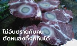 เนื้อหมูเป็นฝีหนองไหลเยิ้ม ปศุสัตว์ยันไม่อันตราย ห้างดังเอาหมูมาเปลี่ยนให้แล้วเงียบ
