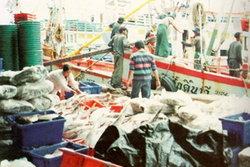 ราคาอาหารทะเลพุ่ง หลังชาวประมงพื้นบ้านหยุดออกเรือ