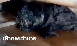 หนุ่มตายปริศนาคาห้องเช่า น้องหมาแสนรักนอนเฝ้าศพไม่ห่างกว่า 3 วัน