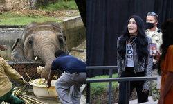 """""""แชร์"""" นักร้องดังระดับตำนาน ยื่นมือช่วย """"ช้างผู้โดดเดี่ยวที่สุด"""" ในปากีสถาน"""