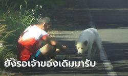 หมาโดนทิ้งทางขึ้นเขาค้อ ยังนั่งรอเจ้าของ ขณะผู้ใจบุญจะรับไปเลี้ยง แต่ไม่ยอมให้จับ