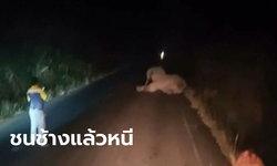 ช้างป่าเขาอ่างฤๅไน ถูกรถพ่วงชนเจ็บสาหัส โซซัดโซเซหนีหายเข้าป่า-ทิ้งไว้แต่กองมูล