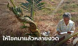 ฮือฮา! พบต้นมะพร้าวคล้ายพญานาค ชาวบ้านแห่ขอเลขเด็ดงวดนี้