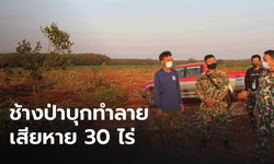 พังราบ 30 ไร่! โขลงช้างป่า บุกทำลายสวนขนุนชาวบ้าน เสียหายนับแสน