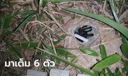 """ส่องเลขเด็ด """"พญาบึ้ง"""" งวดนี้มาเต็ม 6 ตัว คอหวยทั่วไทยหลั่งไหล หลังแจกโชคหลายงวด"""