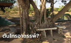 หนุ่มวัย 38 ปี ใช้รากต้นไทรผูกคอเสียชีวิต ลืออาถรรพ์ตายปริศนาแล้ว 2 ศพ