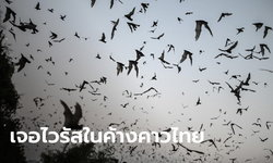 """งานวิจัยเผย พบไวรัสใน """"ค้างคาวเกือกม้า"""" ในไทย คล้ายเชื้อต้นตอของโควิด-19"""