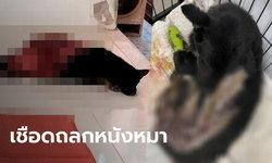 หมาดำถูกเชือด-ถลกหนังครึ่งตัว แต่ไม่ตาย วิ่งหนีออกมาสภาพอนาถ แผลเหวอะสาหัส