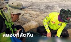 สุดสยอง! พบศพครึ่งท่อนใส่กางเกงวอร์มสีดำ ลอยบนเกาะอ่าวสัตหีบ