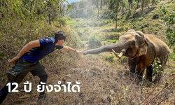 """""""หมอล็อต"""" โพสต์ภาพประทับใจ เจอช้างป่าที่เคยรักษา ผ่านมา 12 ปี ยังจำกันได้"""
