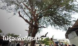 ยายวัย 72 ปี เครียดจัด! ปีนต้นมะขาม เจ้าอาวาสวัดดังนำดินมาถม จนบ้านร้าว-พัง-ทรุด