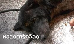 สุดเศร้า หลวงตาห่วงหมาแสนรัก นั่งลงเอาตัวเองบังไม่ให้รถชน มรณภาพสลดกลางถนน