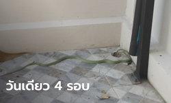 แห่ถามบ้านเลขที่ งูเลื้อยเข้าบ้านหนุ่มนักมายากล วันเดียว 2 ตัว เข้า 4 รอบ