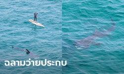 เผยภาพสุดทึ่ง! ฉลามยักษ์น้ำอุ่น ว่ายประกบนักกระดานยืนพายกลางทะเลอังกฤษ
