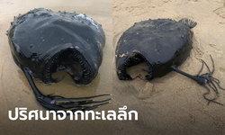 ฮือฮา! พบปลาทะเลลึก 1,000 เมตร สุดหายาก เกยตื้นปริศนาริมหาดสหรัฐ
