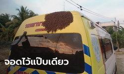 แห่ดูเลขทะเบียน! ฮือฮาผึ้งนับหมื่นตัว ทำรังบนหลังคารถฉุกเฉินกู้ภัยเมืองเลย