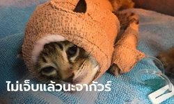 """เศร้า..""""จากัวร์"""" หนึ่งในลูกแมวที่กัดกับหมา สู้ต่อไม่ไหว สิ้นใจกลับดาวแมว"""