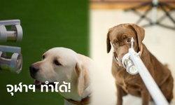 ปรบมือ! จุฬาฯ วิจัยสุนัขดมกลิ่นหาผู้ติดเชื้อโควิด สำเร็จครั้งแรกในประเทศไทย