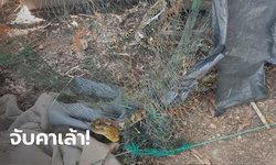เจอแล้ว งูเหลือมจอมเขมือบ กินไก่เกือบ 100 ตัว เตรียมเอาเลขที่บ้านไปเสี่ยงโชค