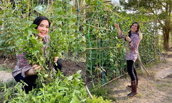 """""""โบ ชญาดา"""" เปลี่ยนชุดเป็นคนสวน ปลูกผักสมุนไพร เตรียมแจกจ่ายให้คนที่ต้องการ"""