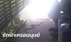 หนุ่มสะดุ้งโหยง ยืนซักผ้าอยู่ดีๆ งูเลื้อยเข้ามาหา วัดความยาวได้กว่า 2.5 เมตร