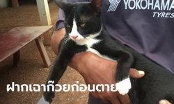 สุดเศร้า หนุ่มเขียนสั่งเสียก่อนผูกคอตาย ฝากพ่อแม่ดูแลแมว อย่าลืมให้อาหารด้วย