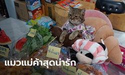 """เปิดใจทาส """"บ่งบ้ง"""" แมวแม่ค้าสุดฮอต รับงานรีวิวรัวๆ ไม่ต๊าซตรงไหนเอาปากกามาวง!"""