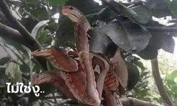 งงตาแตก! หนุ่มโพสต์ภาพสัตว์ปริศนาเกาะต้นไม้ เหมือนงู 3 ตัว แต่แท้จริงไม่ใช่งู